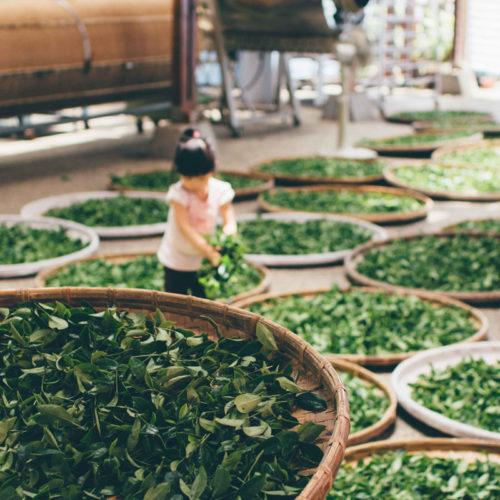 Аромат: «Зеленый чай»