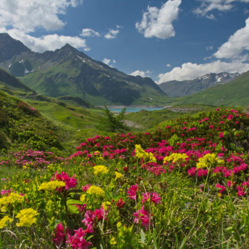 Аромат: «Альпийский цветы»