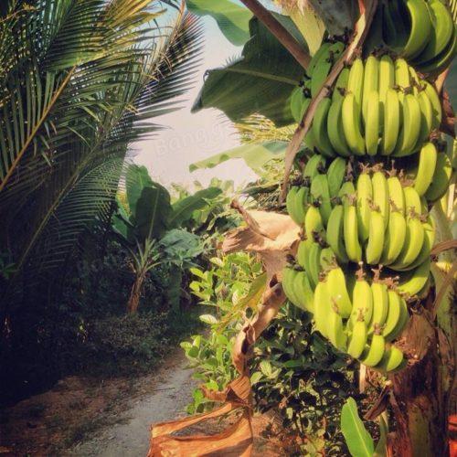 Аромат: «Банановый рай»